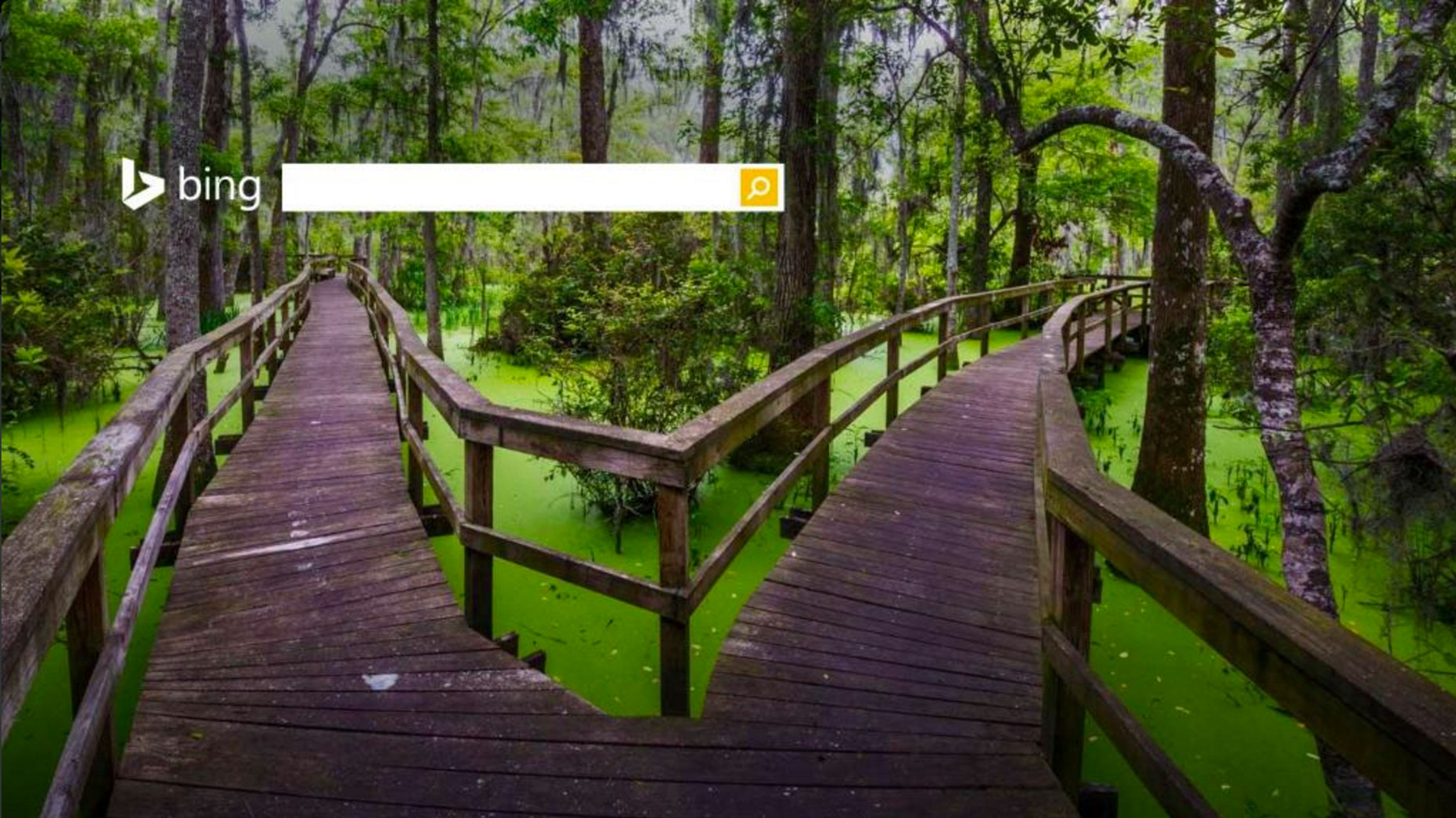 Microsoft - Bing Homepage - Hilton Head Island, South Carolina