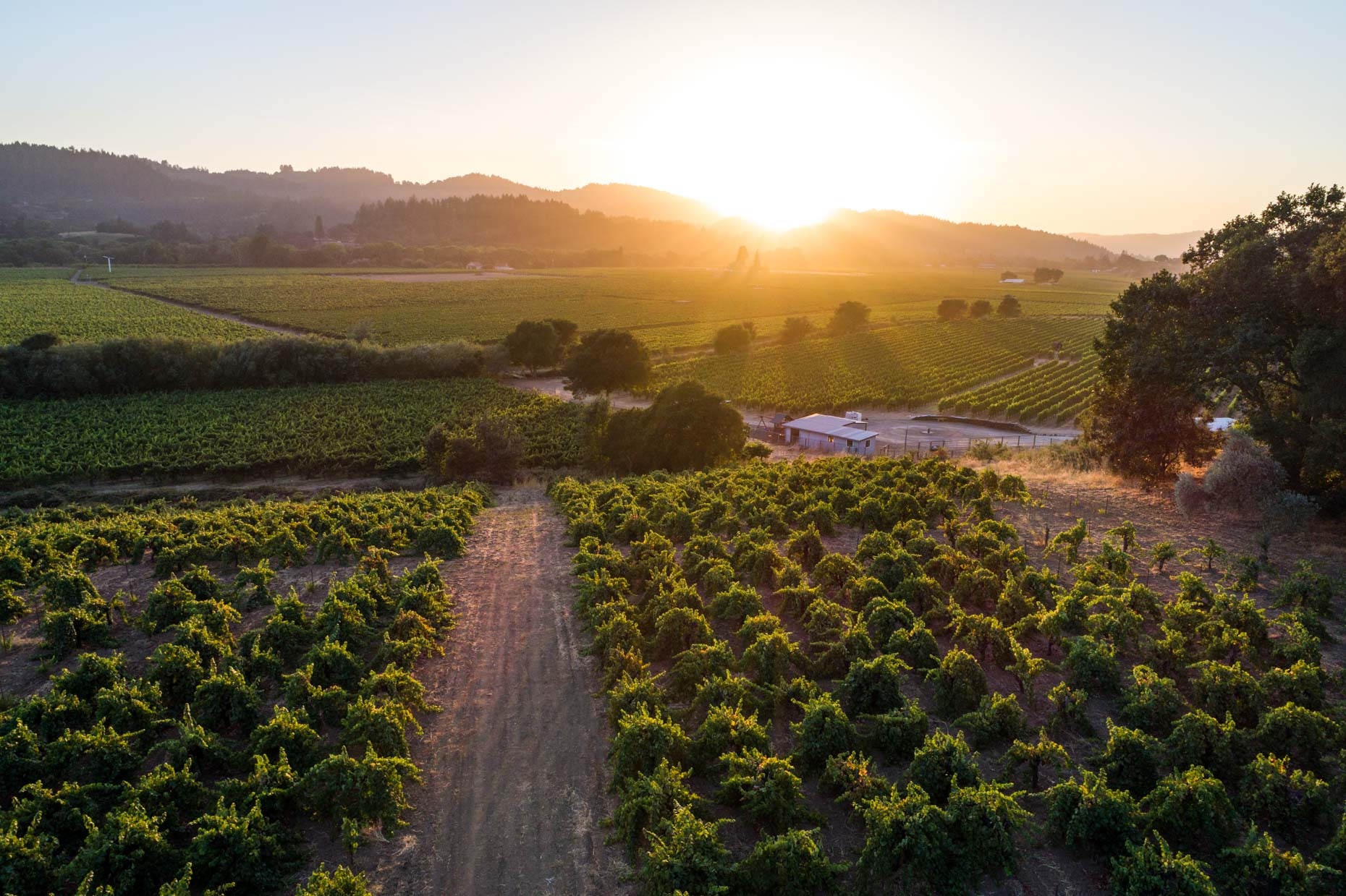 Drone - Dry Creek Valley Wine Country Sunset, Healdsburg, California