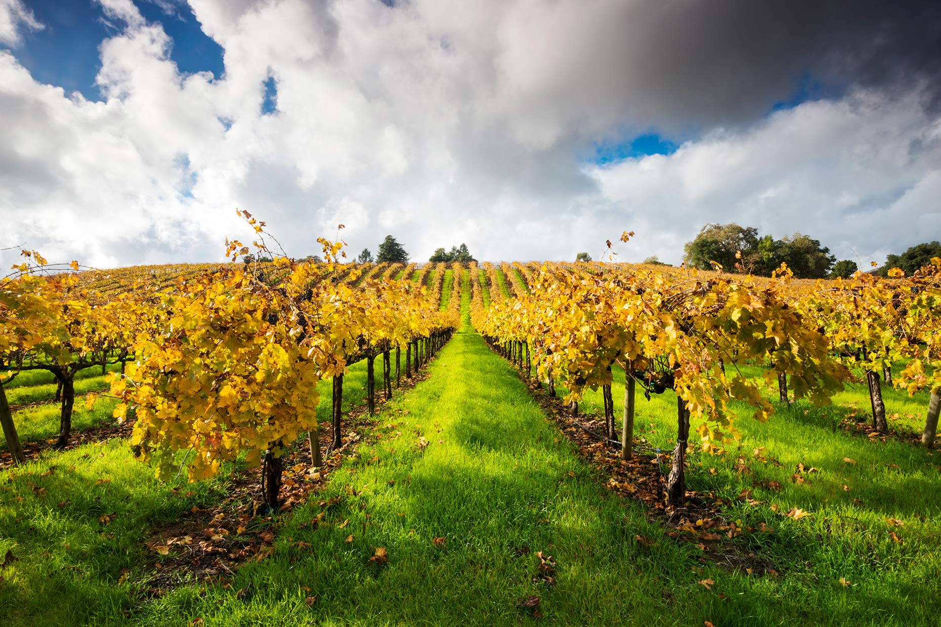 Fall Color In Wine Country - Russian River Valley, Sonoma County, California