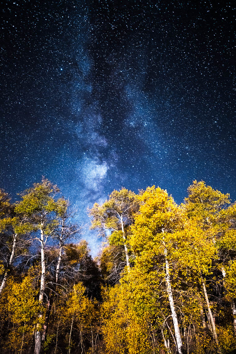 Night Sky - Autumn Aspen Grove - Monitor Pass, California