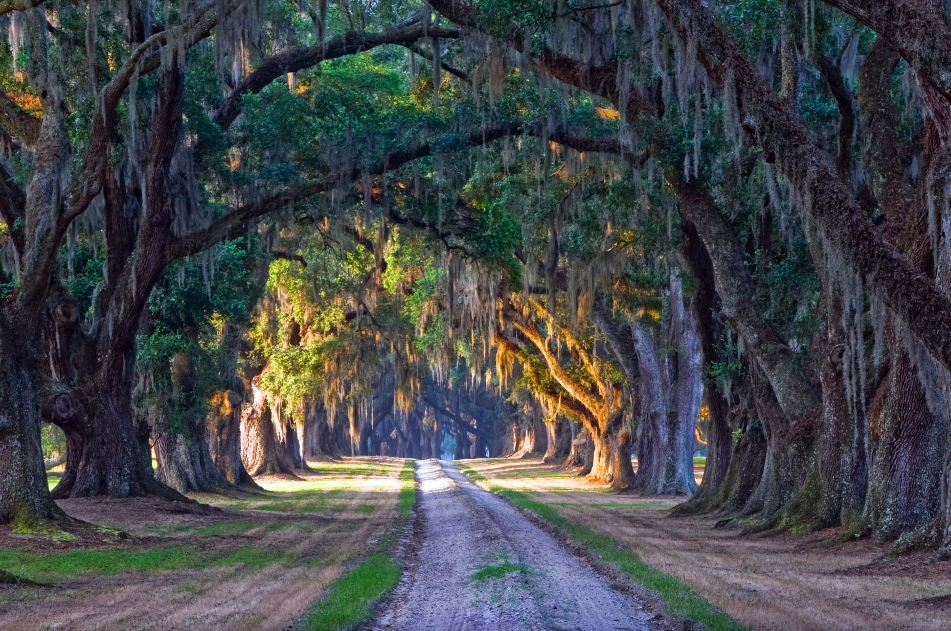 Dirt Road Under Live Oak Trees - Yemassee, South Carolina