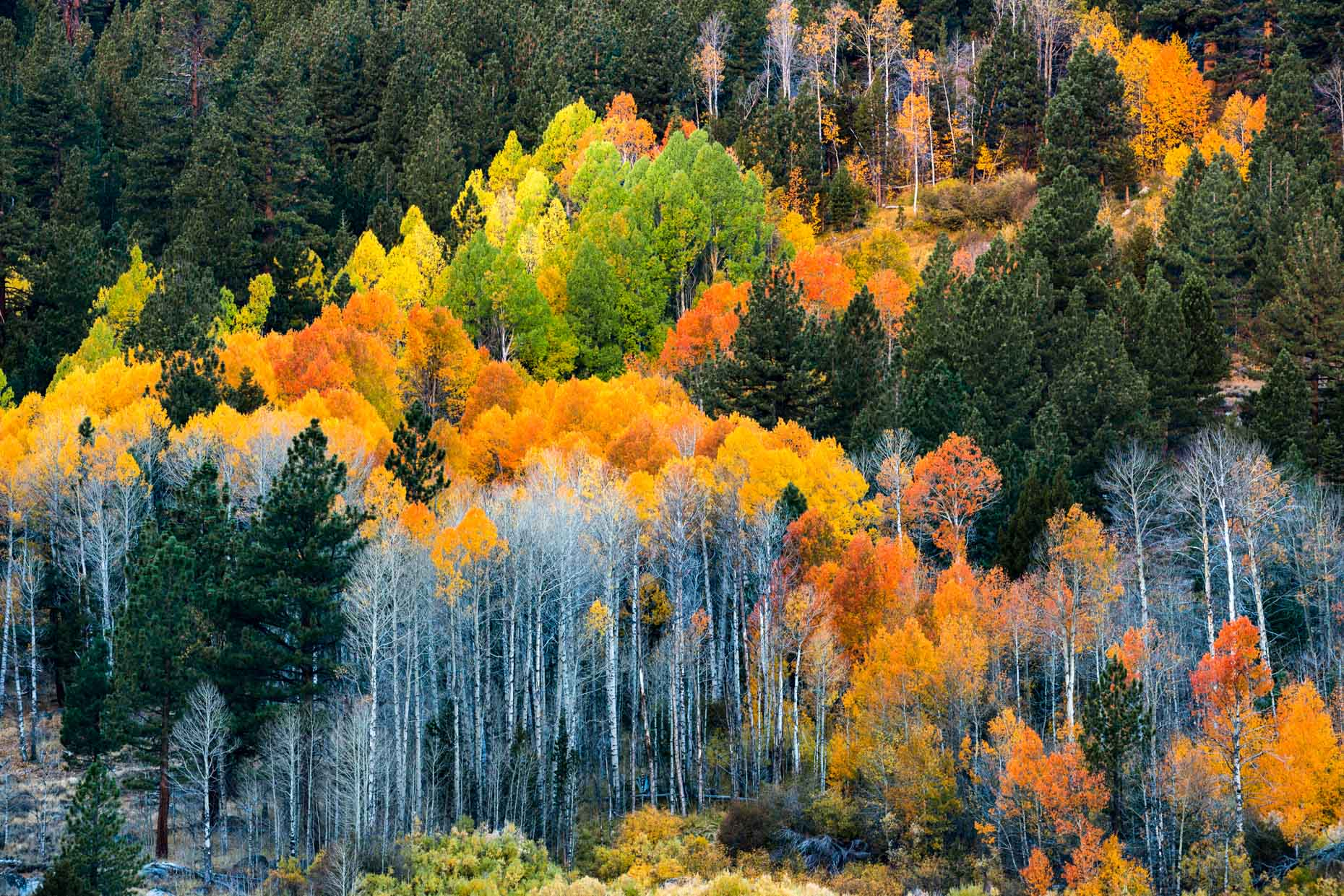 Fall Color - Hope Valley, California