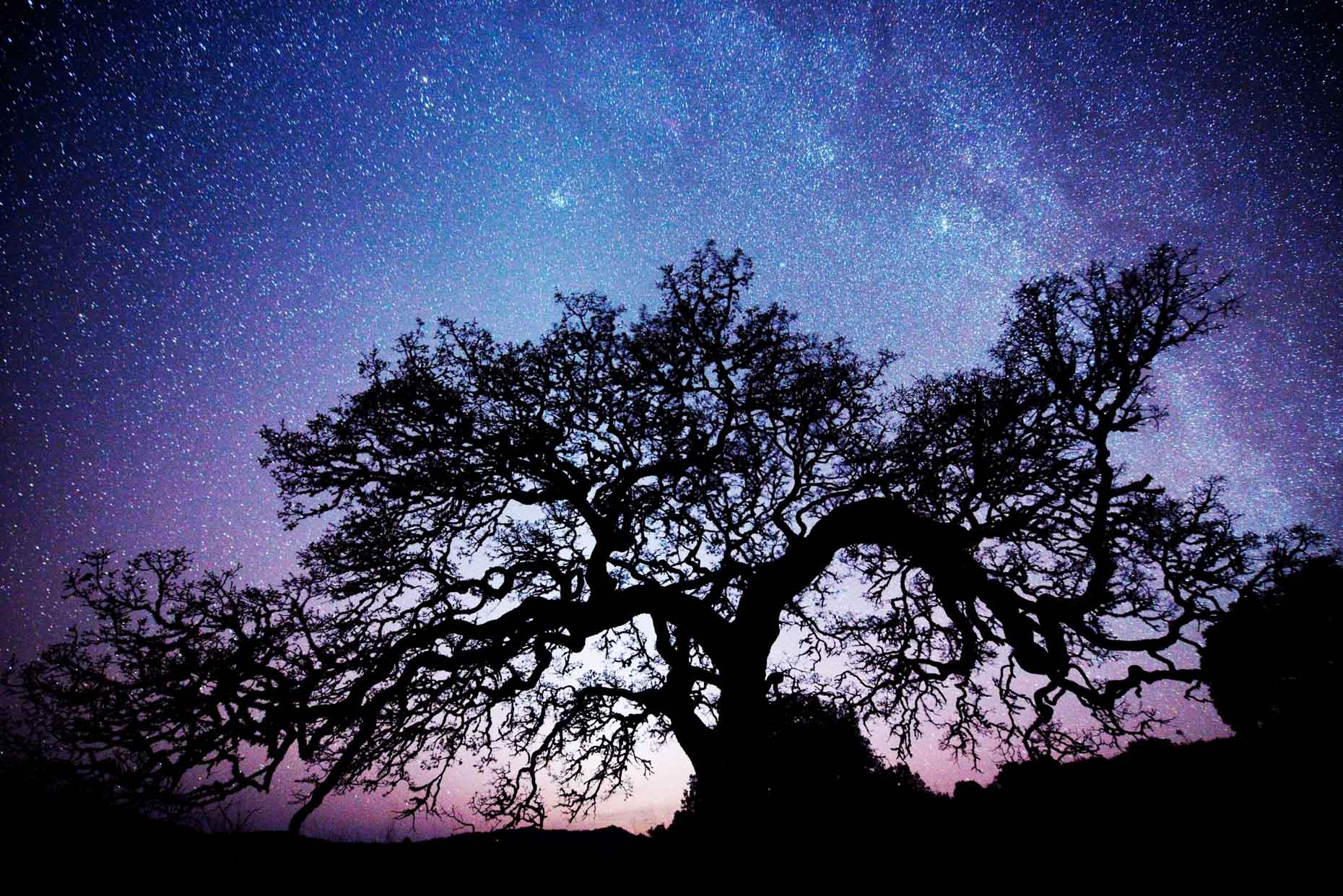 Oak Tree Silhouette At Night - Sonoma, California